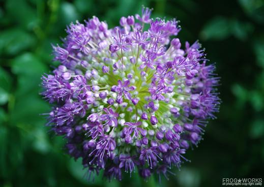 14.05.24flower.jpg