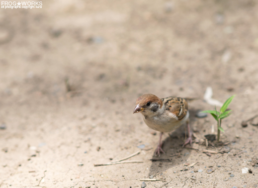 16.07.10sparrow1.jpg
