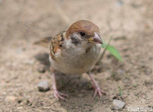 16.07.10sparrow2.jpg
