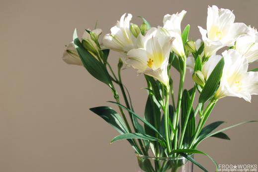 17.04.28flower.jpg