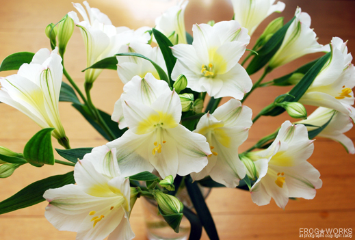 17.05.24flower.jpg