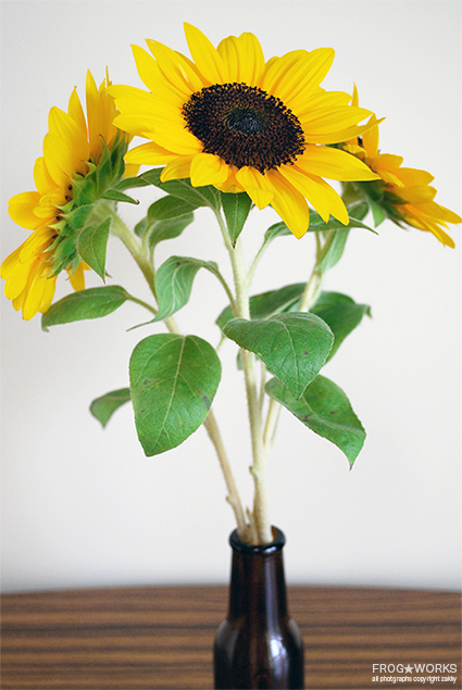 17.08.23sunflower.jpg