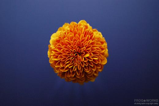 17.02.19flower1.jpg