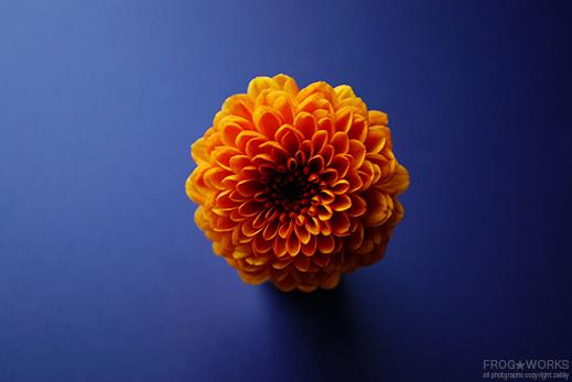 17.02.19flower2.jpg