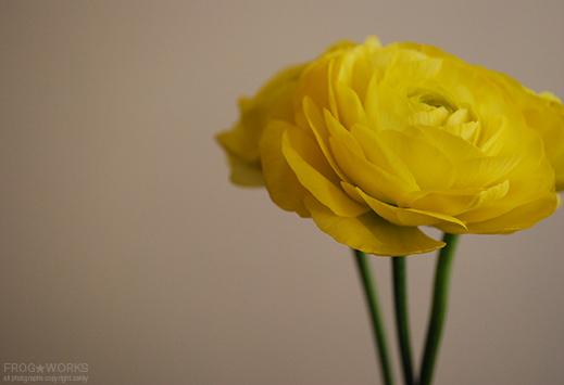 19.01.31flower.jpg